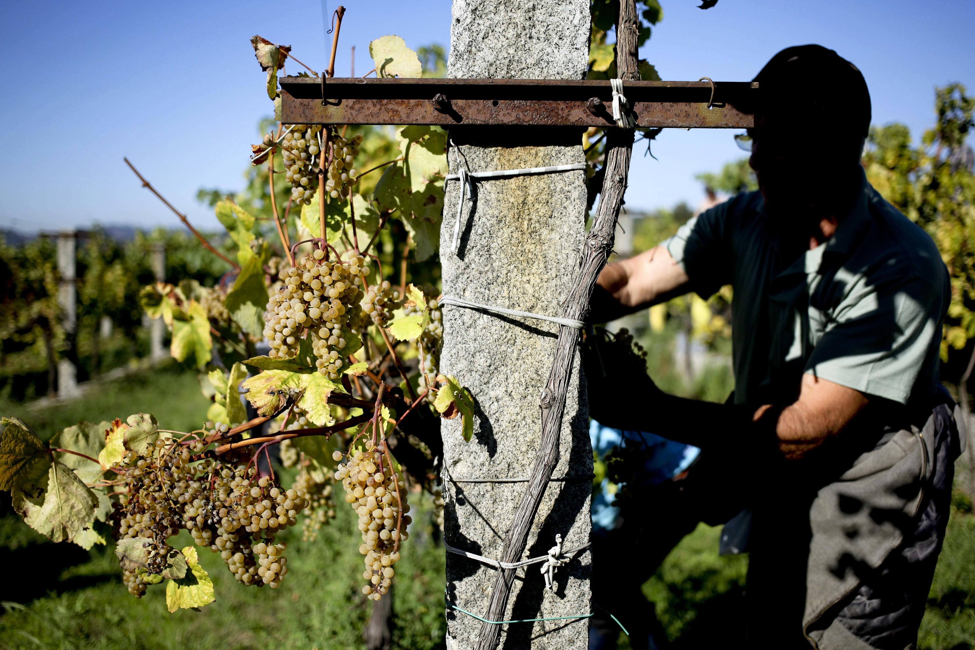 """Dois vinhos alvarinho entre os cinco vencedores do Concurso """"Os Melhores Verdes"""""""