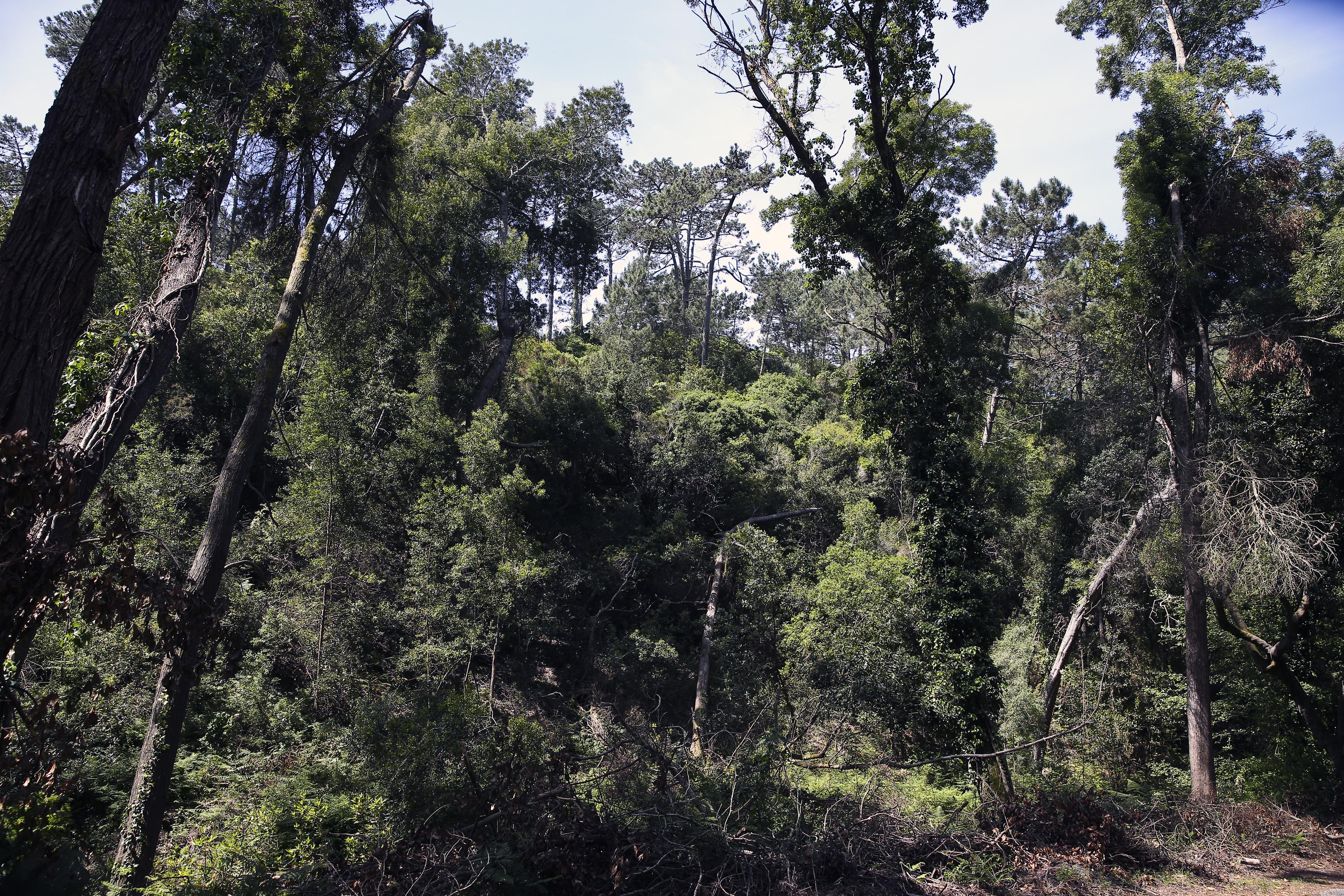 Presidente da República promulga diploma sobre entidades de gestão florestal