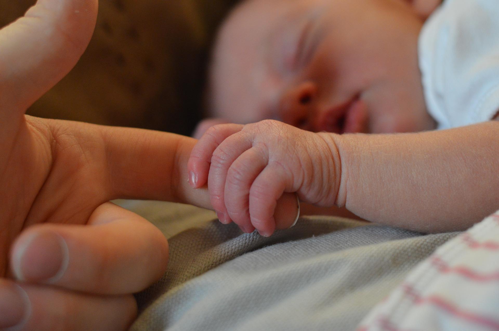 Útero artificial para bebés prematuros testado com sucesso em cordeiros