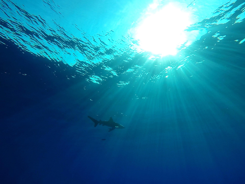 17 espécies de tubarões e raias colocadas na Lista Vermelha de espécies em risco