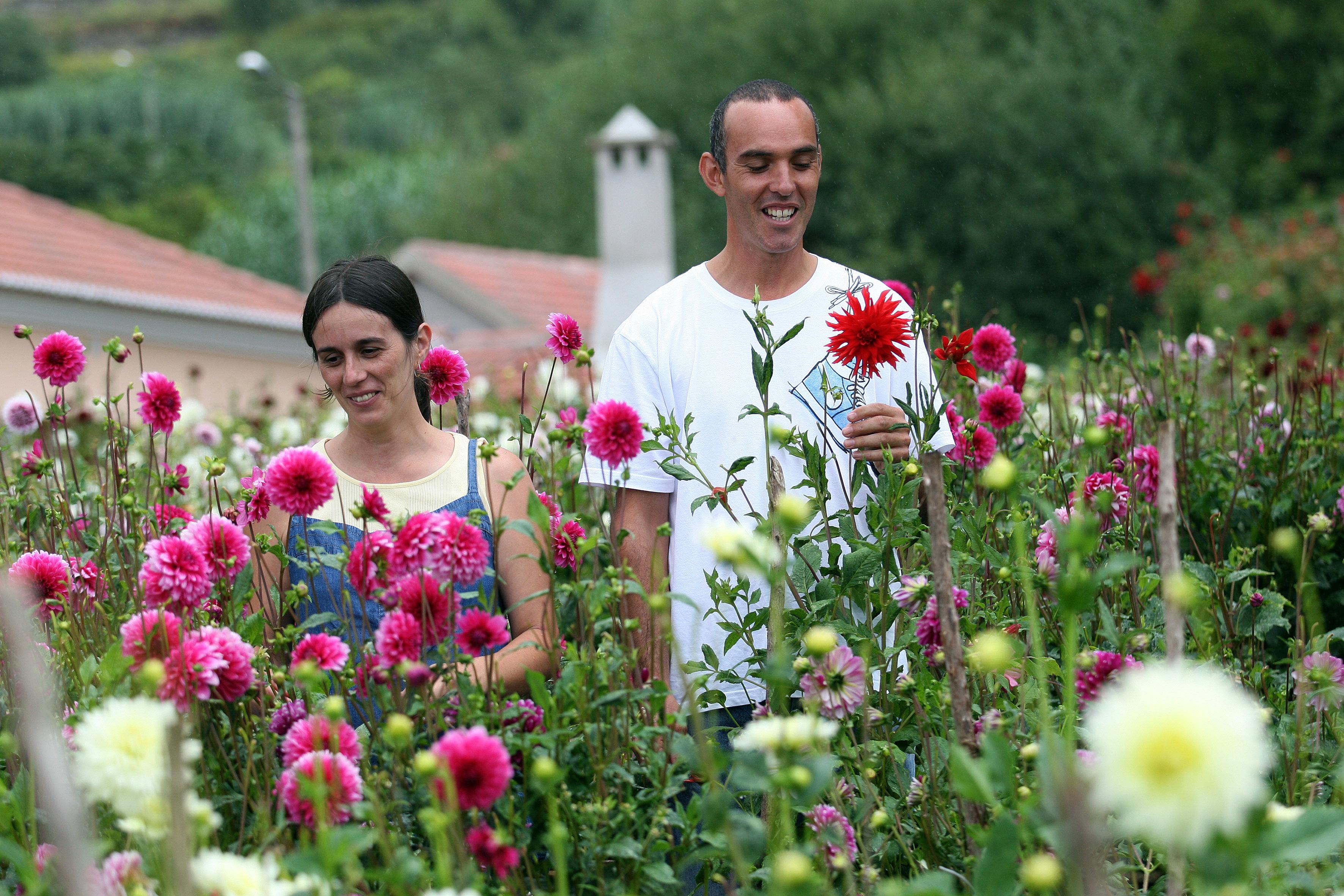 Dálias: do jardim de um guarda florestal para os tapetes florais da Madeira