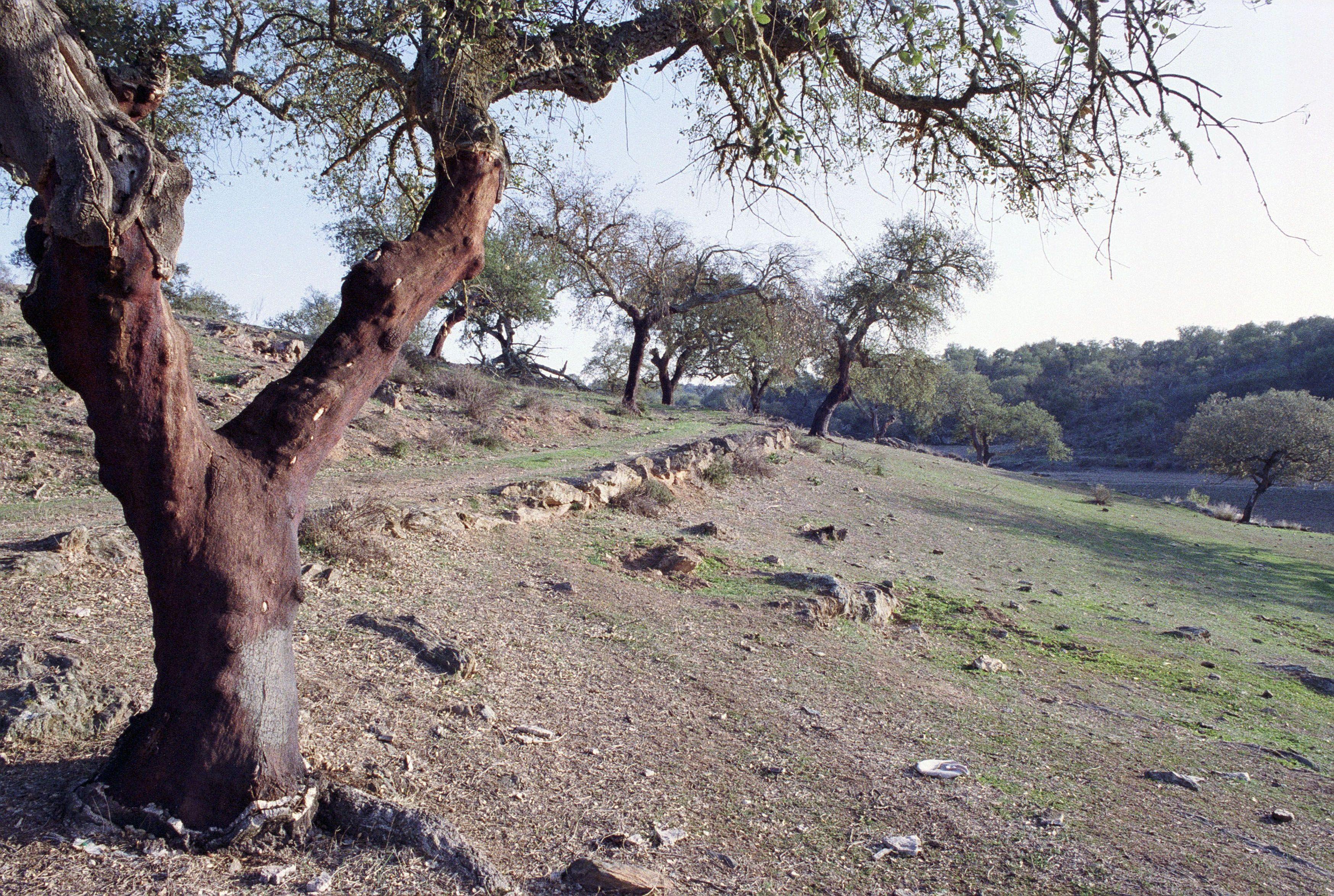 Várias parcelas de terras em Angola sem cadastro consideradas ocupações informais