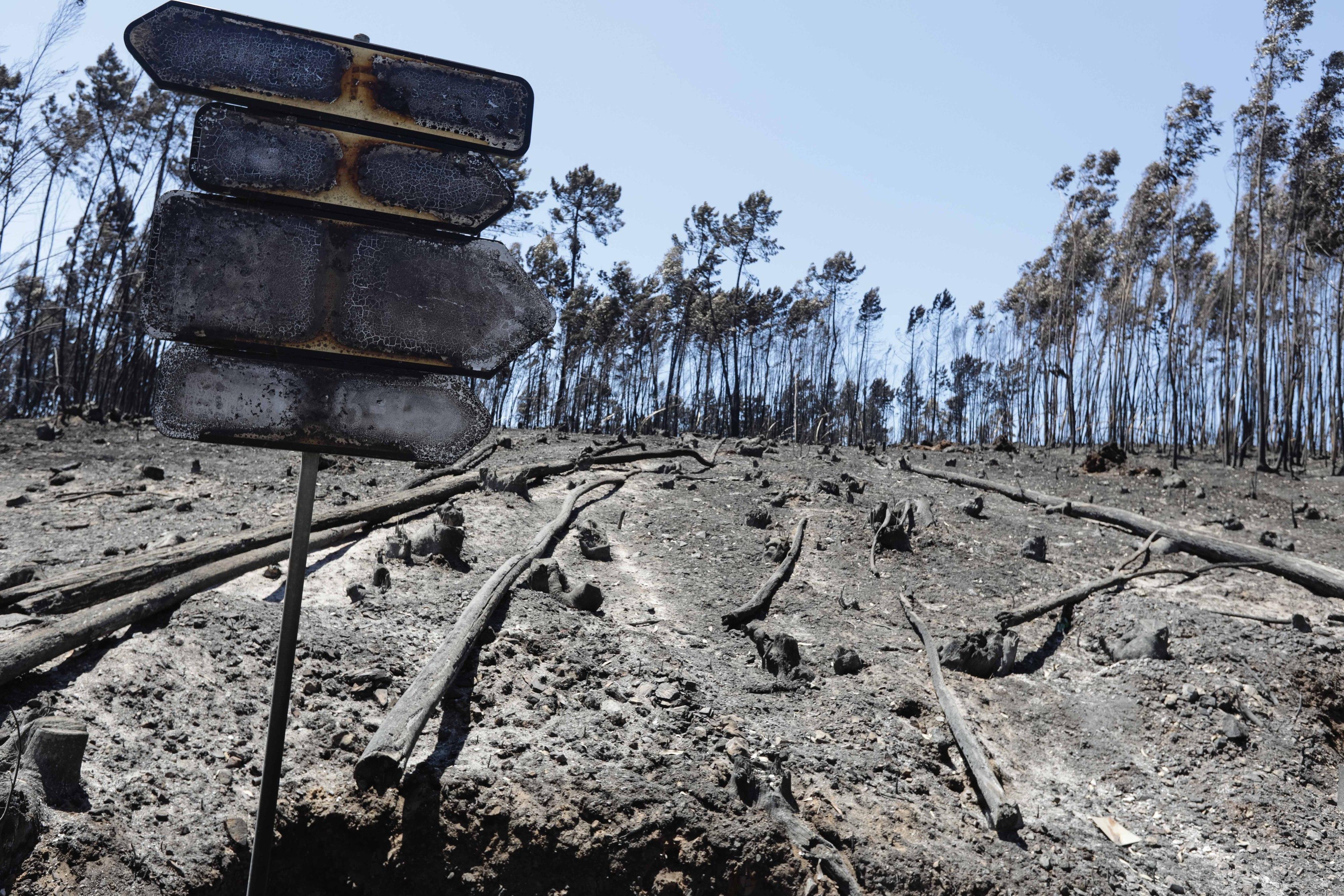 Comissão defende apoio a vítimas dos incêndios na saúde mental como em Pedrógão