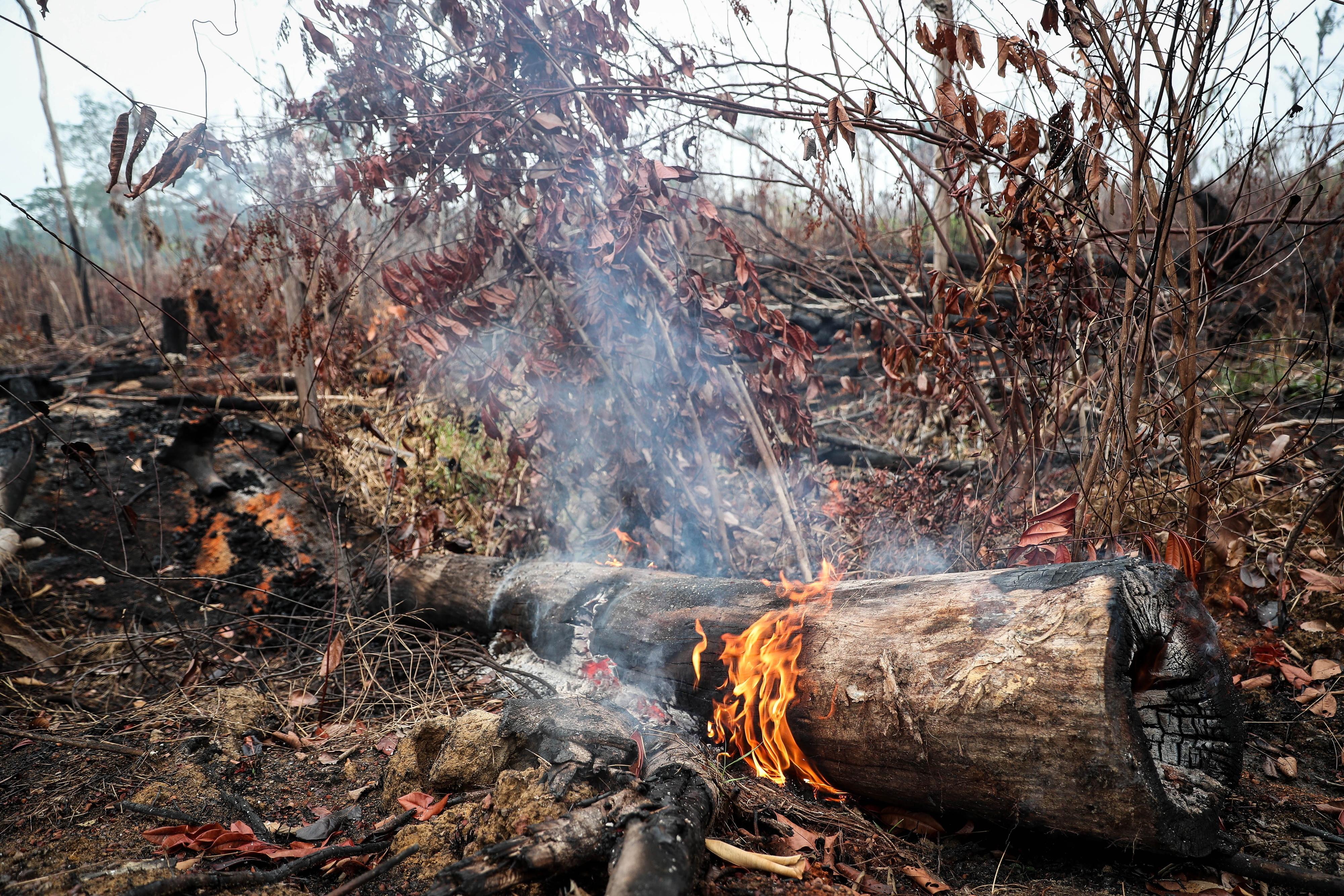 Desflorestação na Amazónia brasileira aumentou 104% em novembro