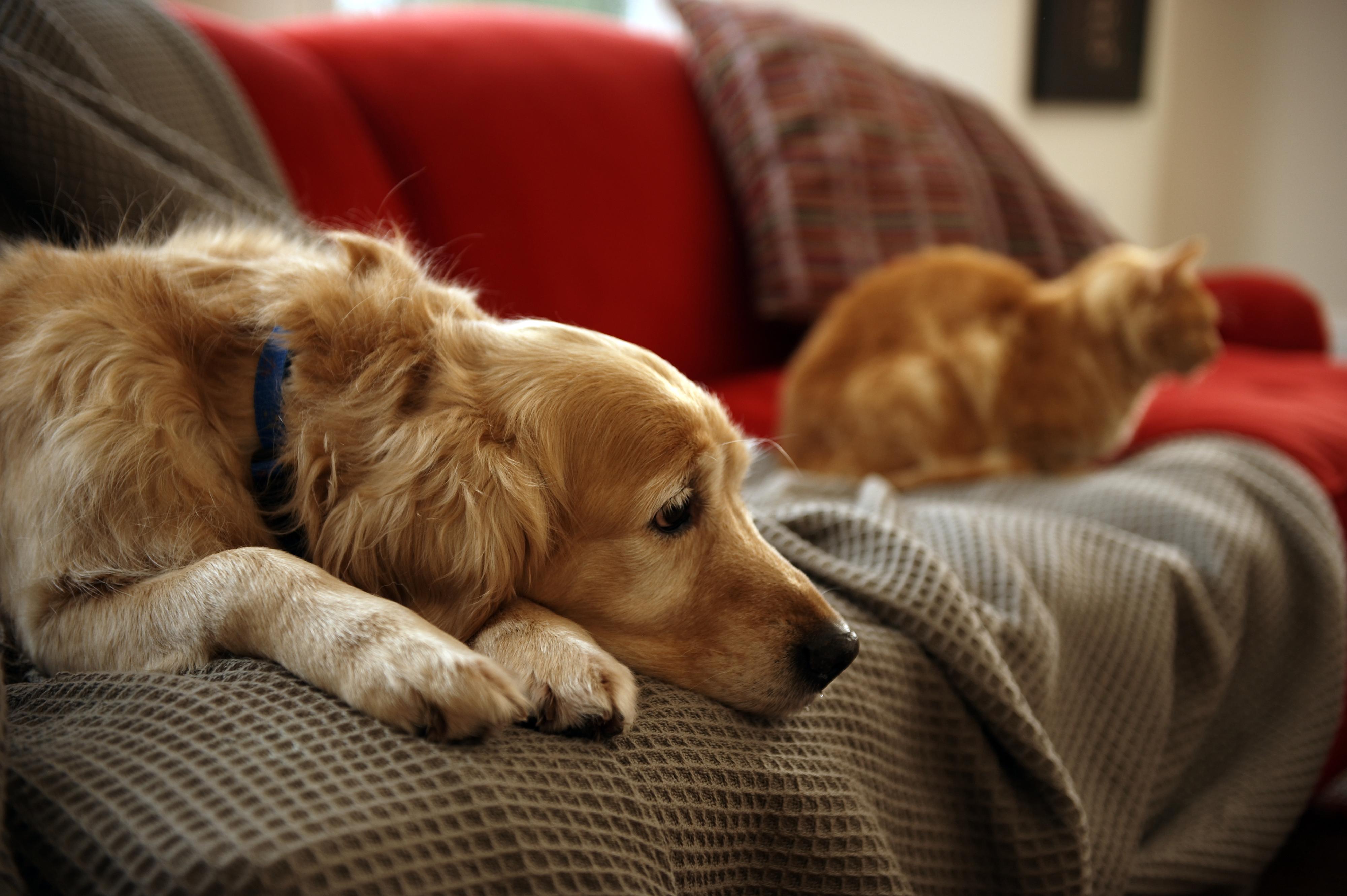 Novos dispositivos digitais monitorizam atividade de cães e gatos