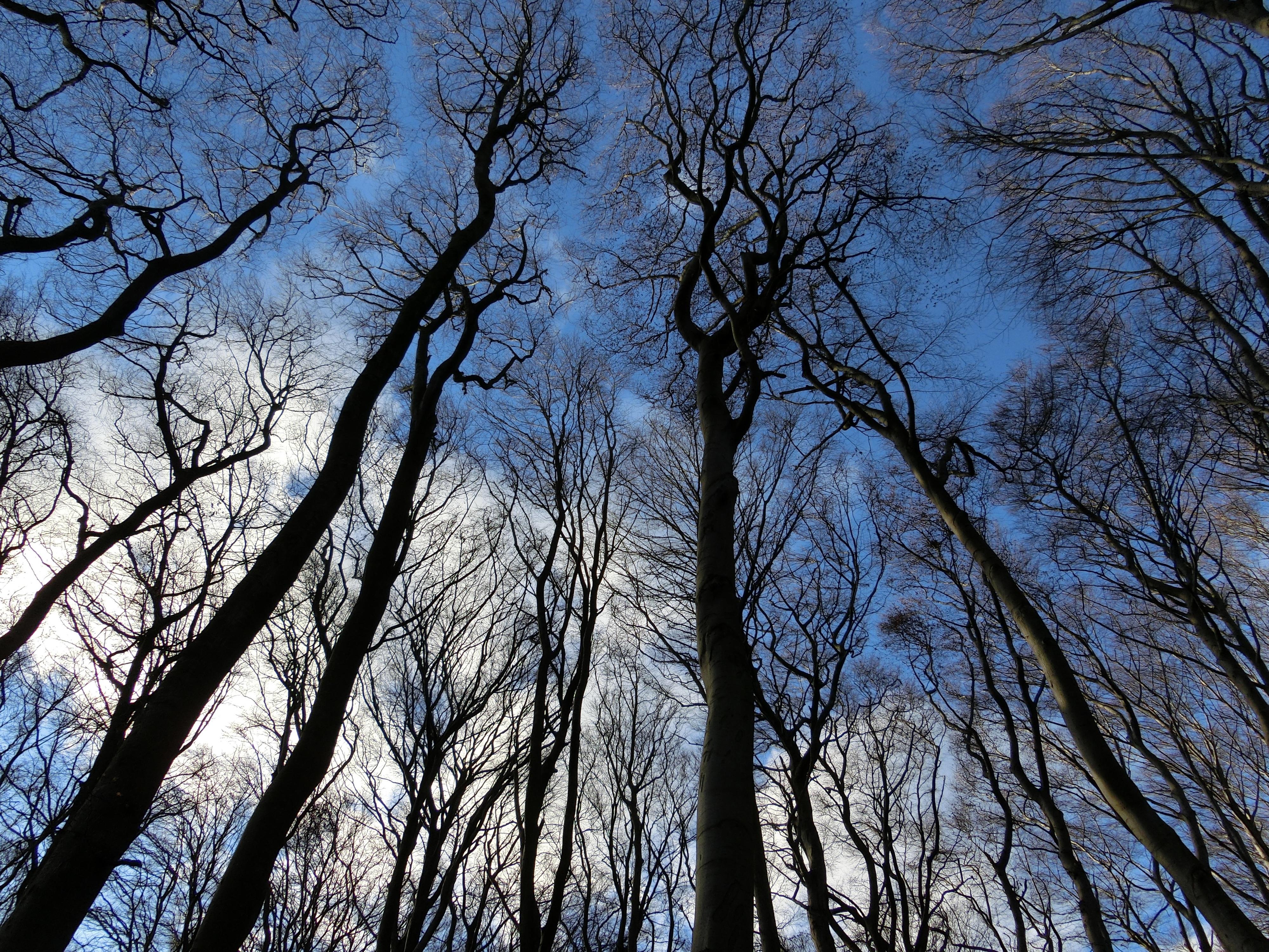 Saúde Pública. Quercus preocupada com suspensão da recolha de animais mortos