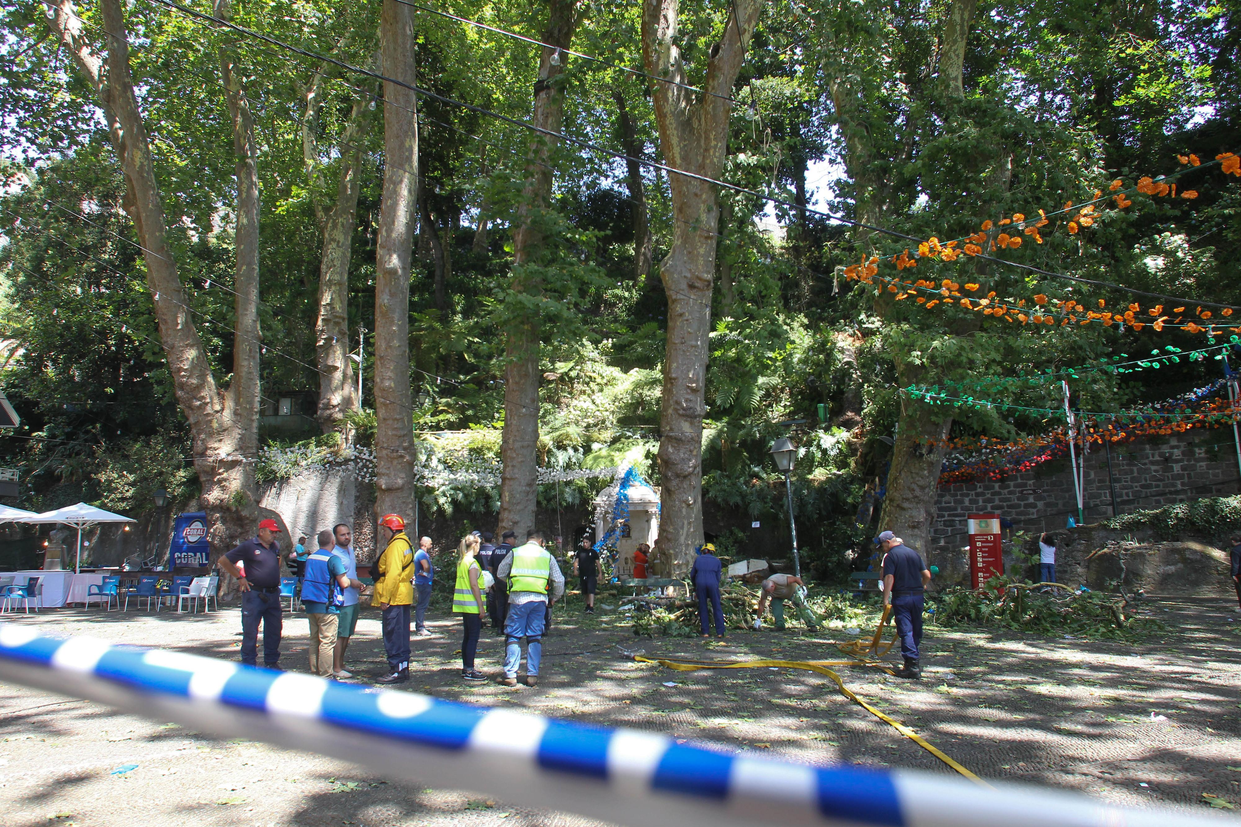 Quatro testemunhas ouvidas hoje no caso da queda da árvore no Monte