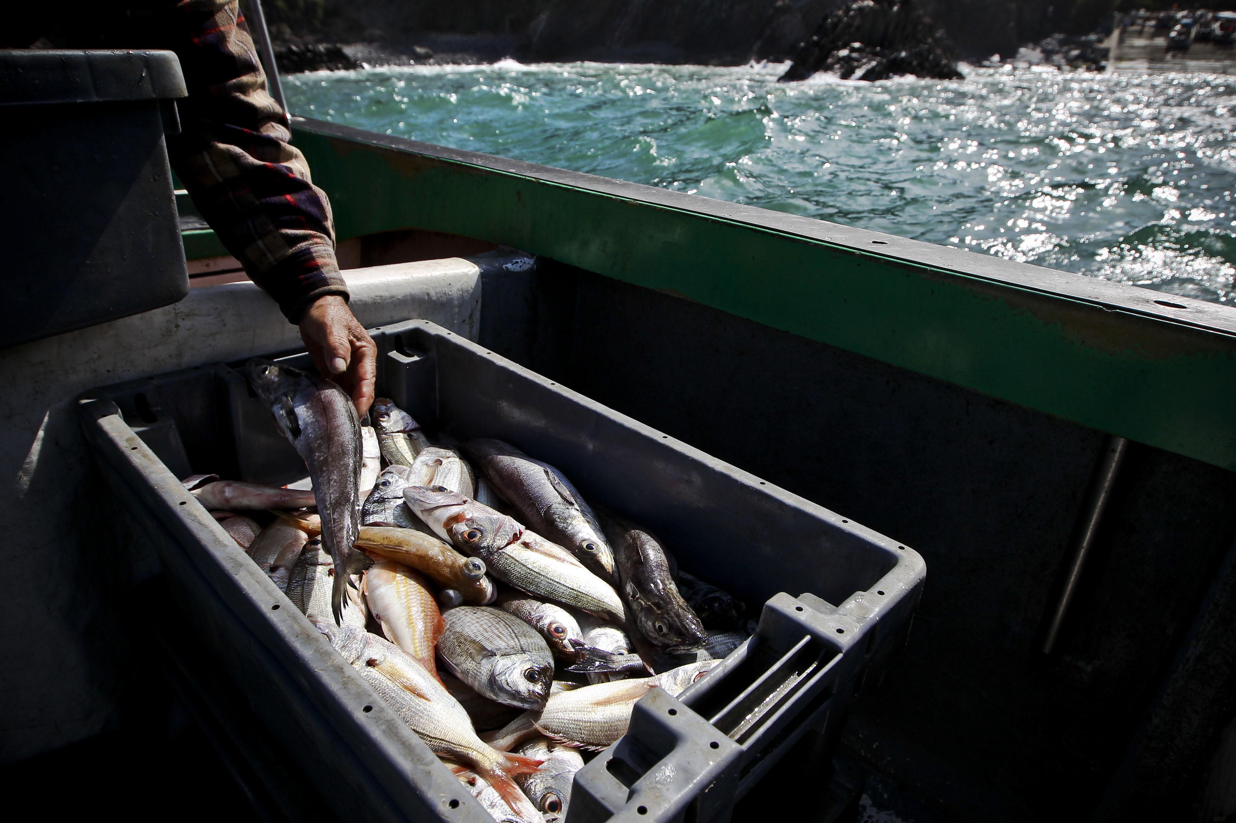 Bruxelas propõe subida na pesca de tamboril e cortes na pescada para 2017