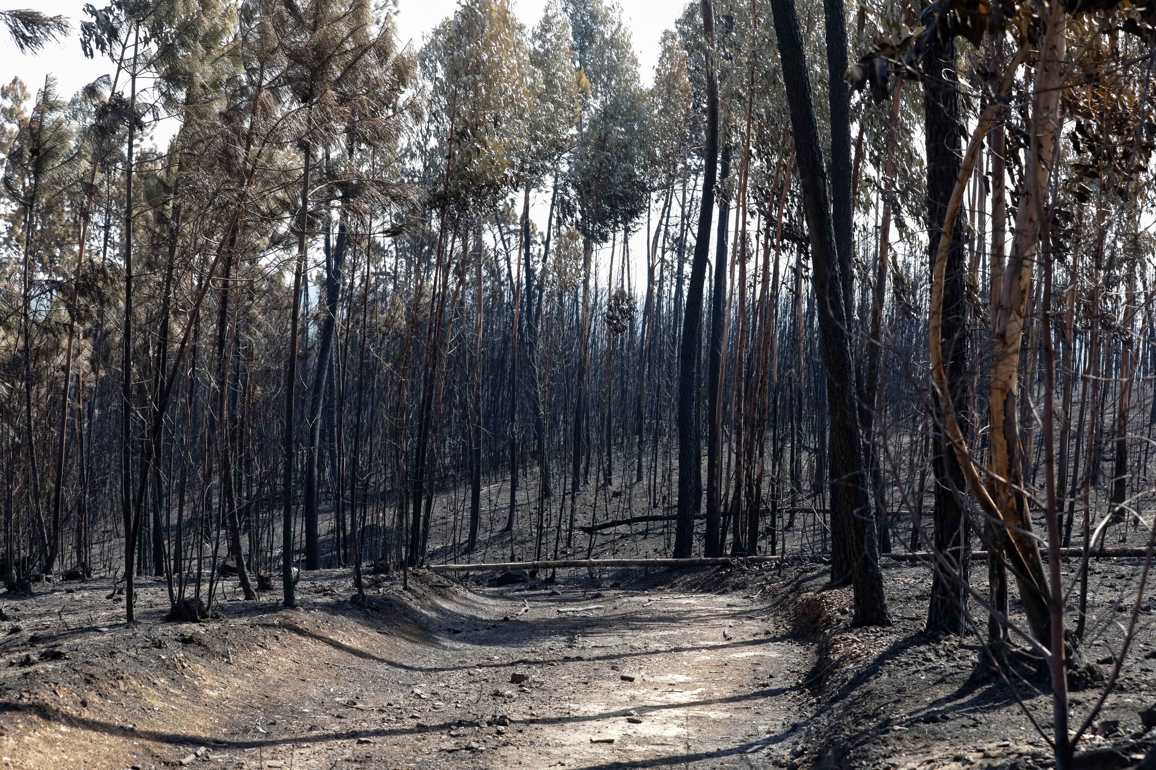 Mação congratula-se por passo dado com plano de recuperação florestal