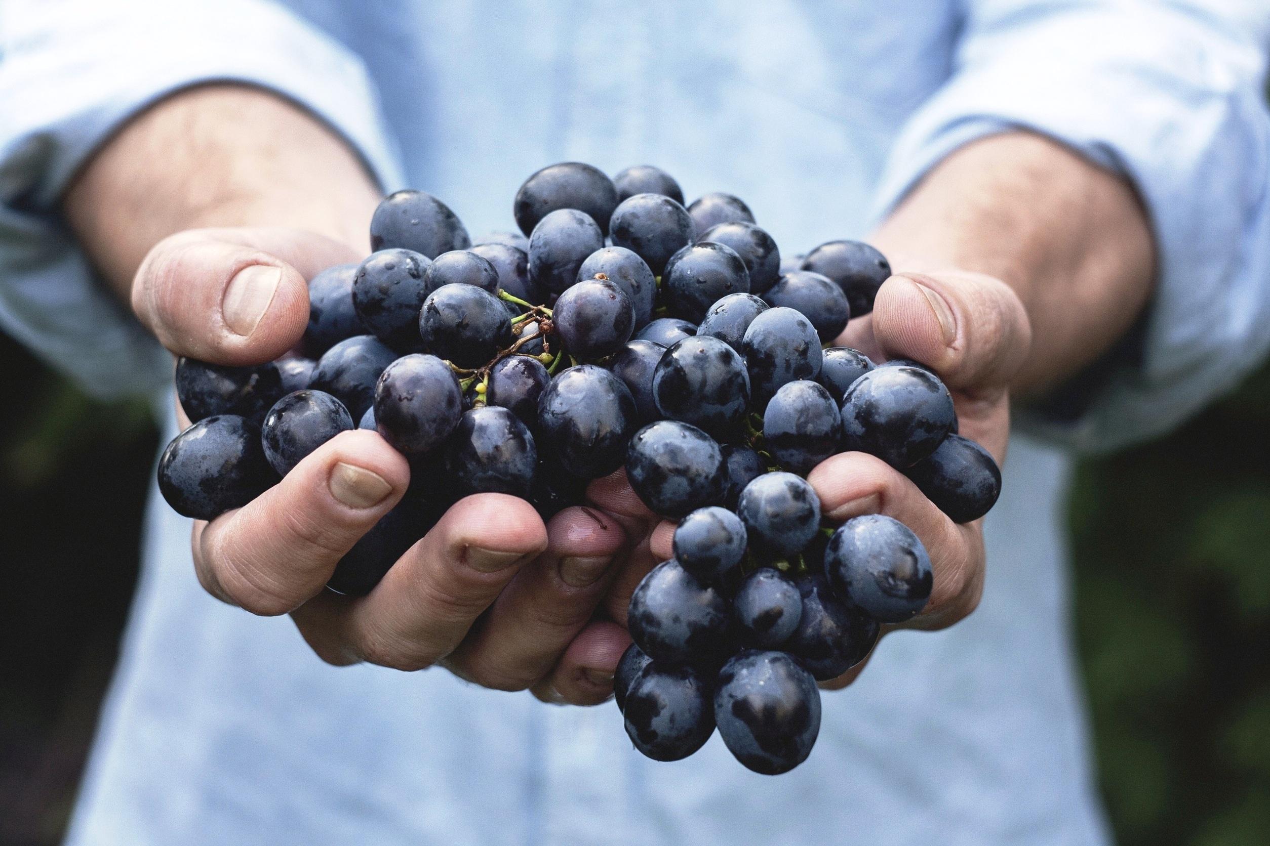 A Quercus faz-lhe uma pergunta: quantos pesticidas já comeu hoje?