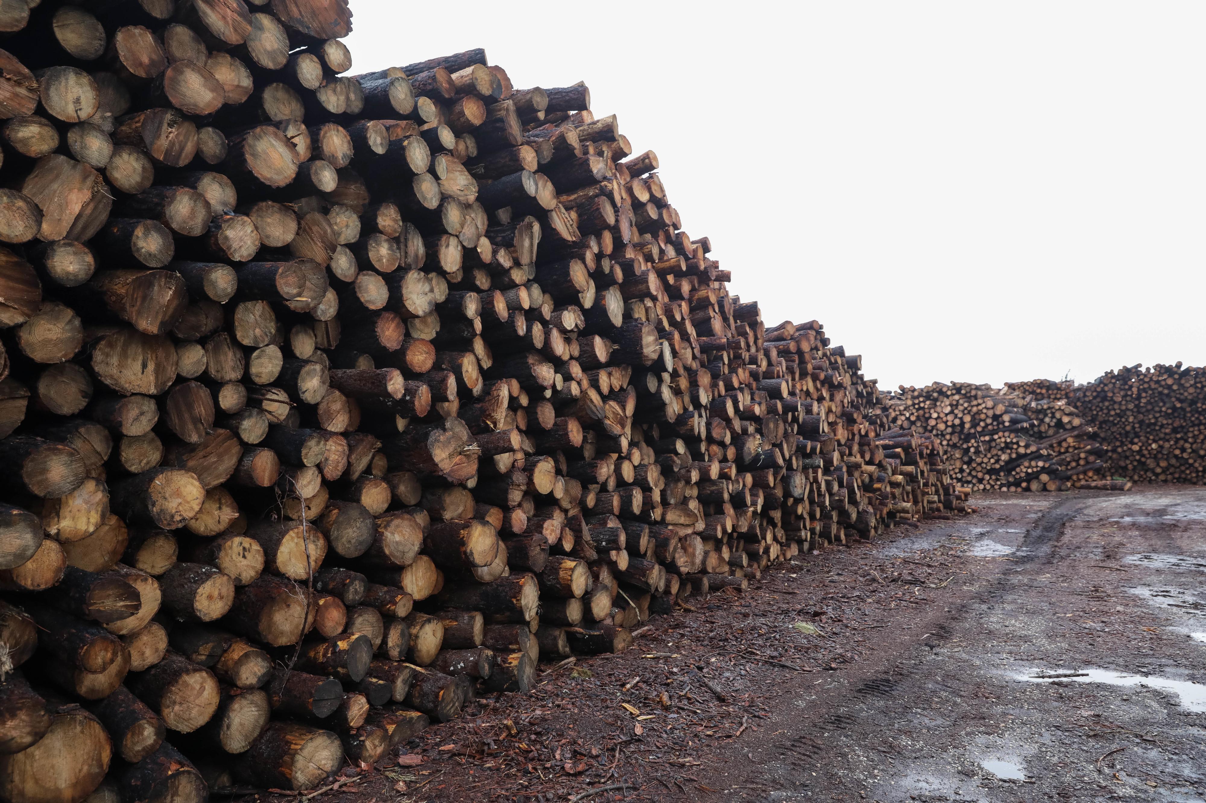 Portucel considera que Moçambique pode aproveitar mercado asiático de madeira e papel