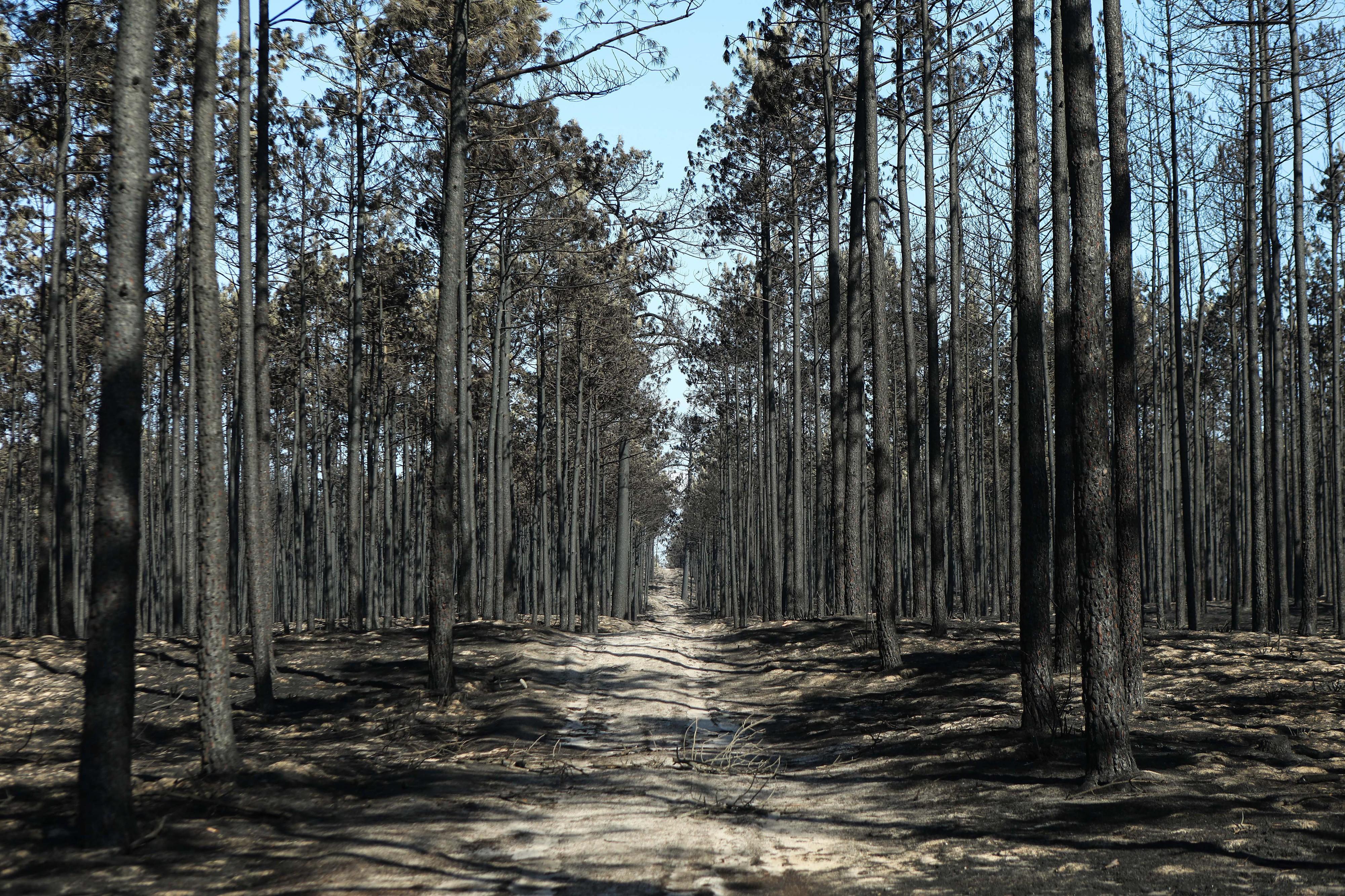 Estabilização de solos do Pinhal de Leiria avança na próxima semana