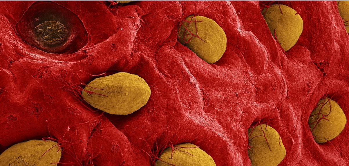 18 olhares sobre o mundo fascinante dos alimentos ao microscópio
