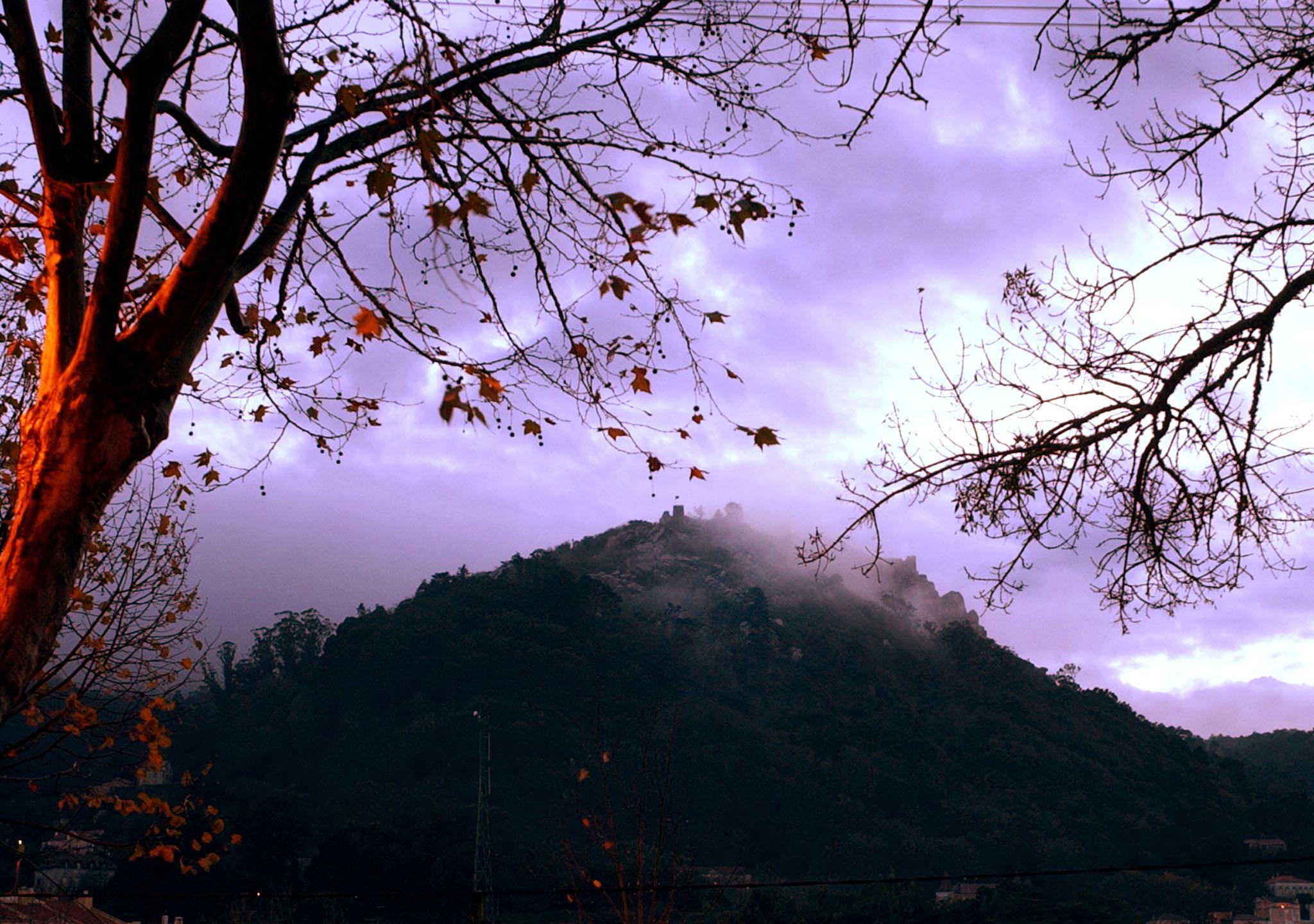 Proteção Civil de Sintra estima corte de 370 árvores na serra
