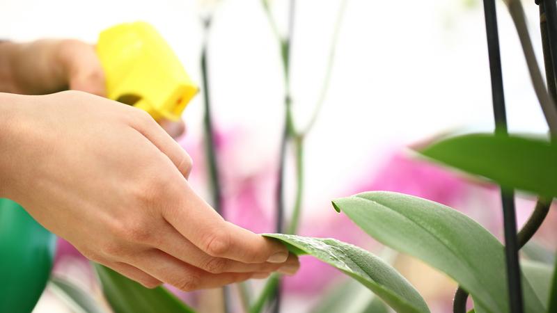 Pragas sugadoras que ameaçam as plantas. Receitas e dicas caseiras para as combater