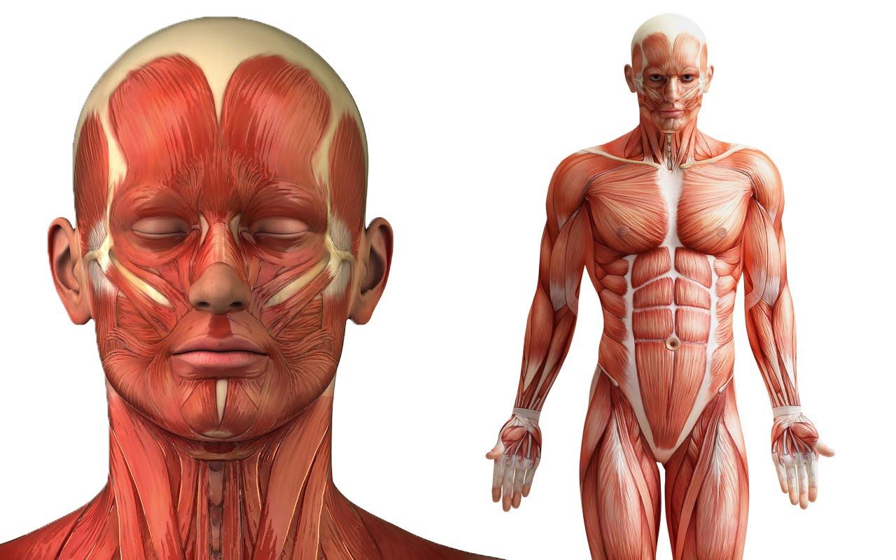 10 partes do corpo sem as quais podemos viver