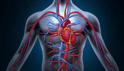 Conhece o seu ritmo cardíaco? Os conselhos de um médico