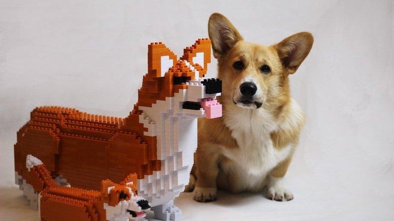 Empresa asiática cria réplicas em blocos de construção dos nossos animais domésticos