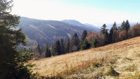 Black Forest - Feldberg