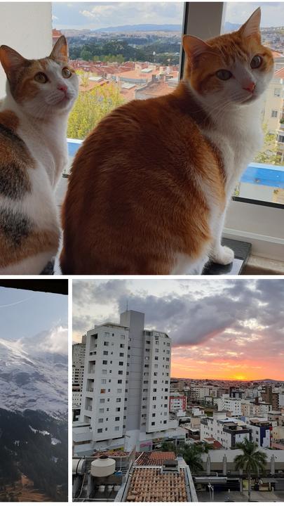O que vejo da minha janela? Da neve aos nossos fiéis companheiros de quarentena