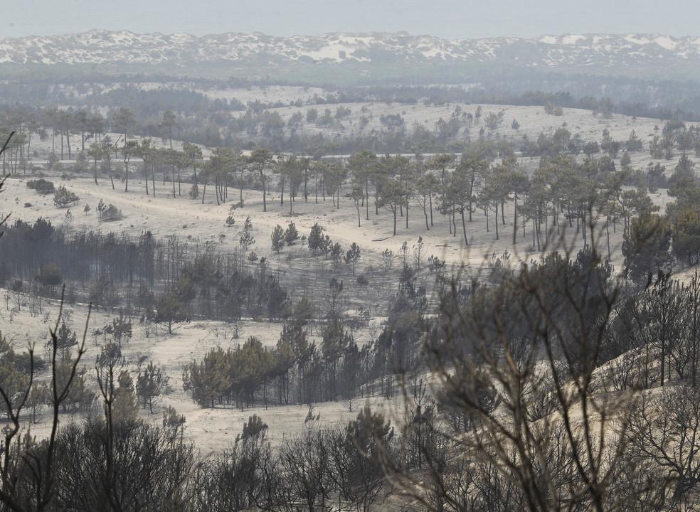 Ministério do Ambiente investe mais de 16 milhões de euros em municípios afetados pelos fogos