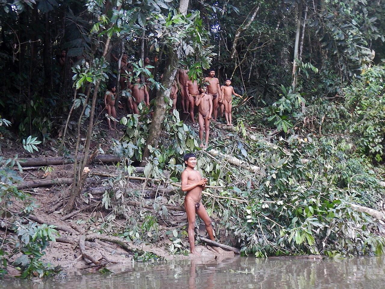 Brasil é o país que perdeu maior área de florestas tropicais primárias