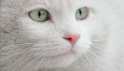 Se é fã de gatos encontra aqui as suas brincadeiras mais divertidas