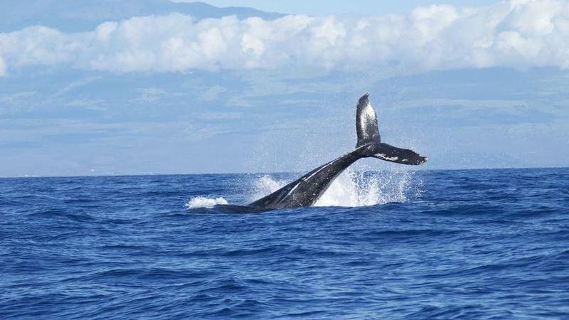 Quer avistar baleias? Veja este top 10 no mundo (Açores incluído, claro)