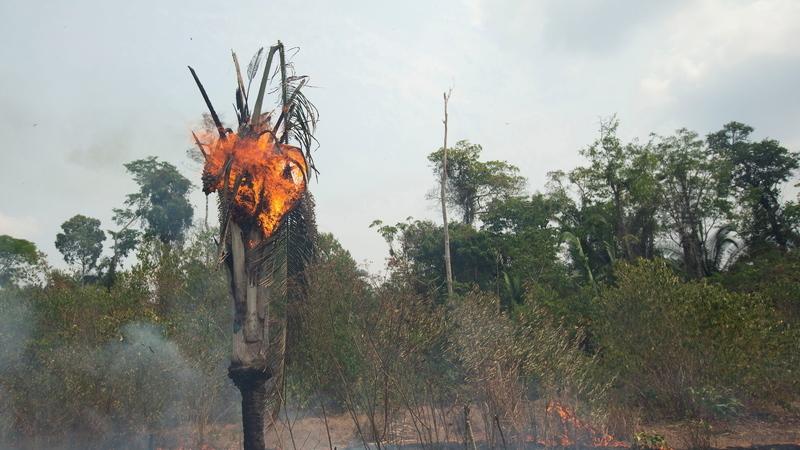Argentina vai enviar 200 bombeiros para ajudar no combate aos incêndios na Amazónia