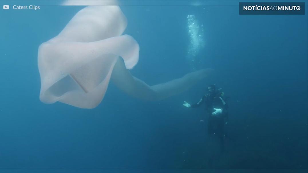 Mergulhadores encontram verme estranho com mais de 8 metros