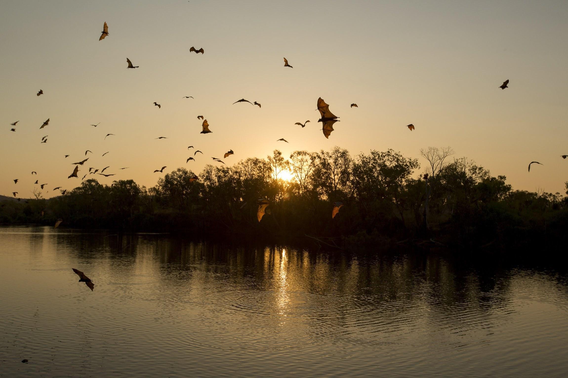 Nova espécie de morcego descoberta em Moçambique