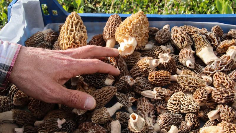 """Quer provar """"a maior açorda de cogumelos do mundo""""? É só rumar este sábado a Macedo de Cavaleiros"""