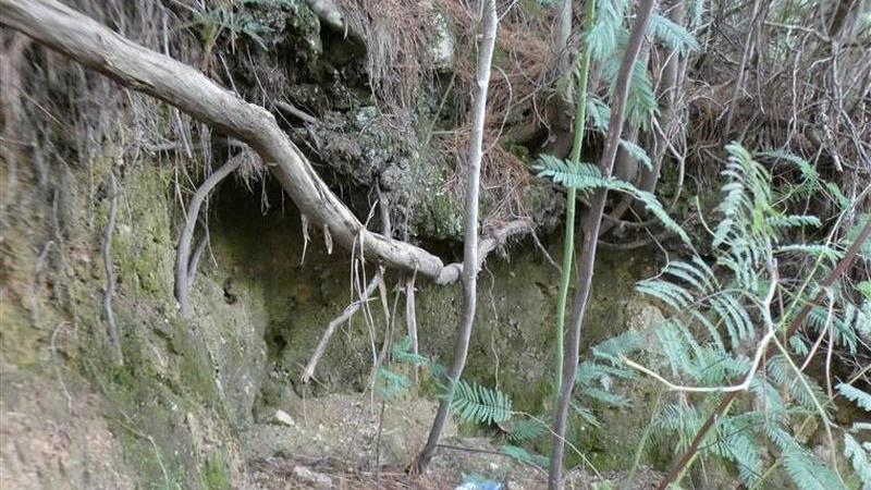 Turista que ficou algemada a árvore no Gerês corria risco de vida