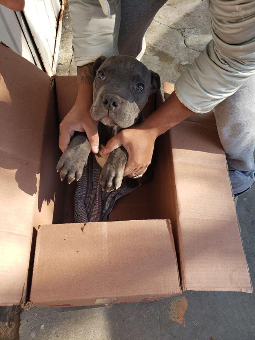 Criança entrega o seu cão a um abrigo de animais para o salvar dos maus tratos do pai