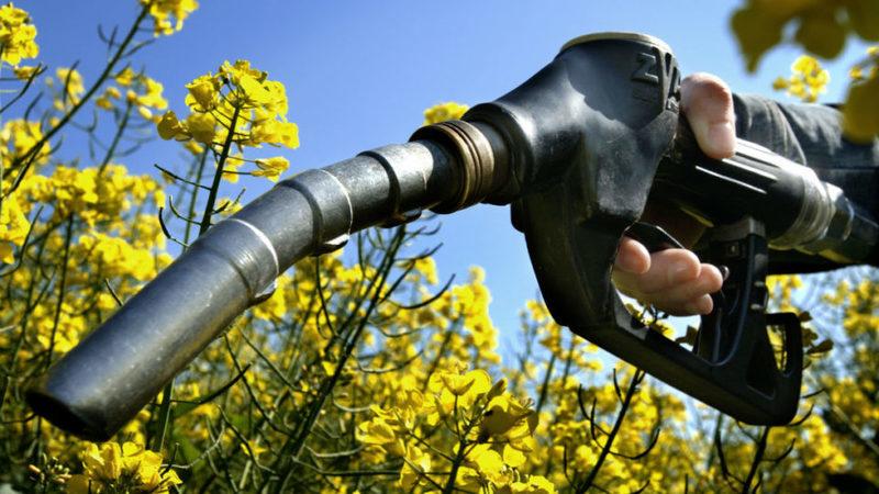 Produzir biocombustíveis pode afetar biodiversidade tanto como alterações climáticas