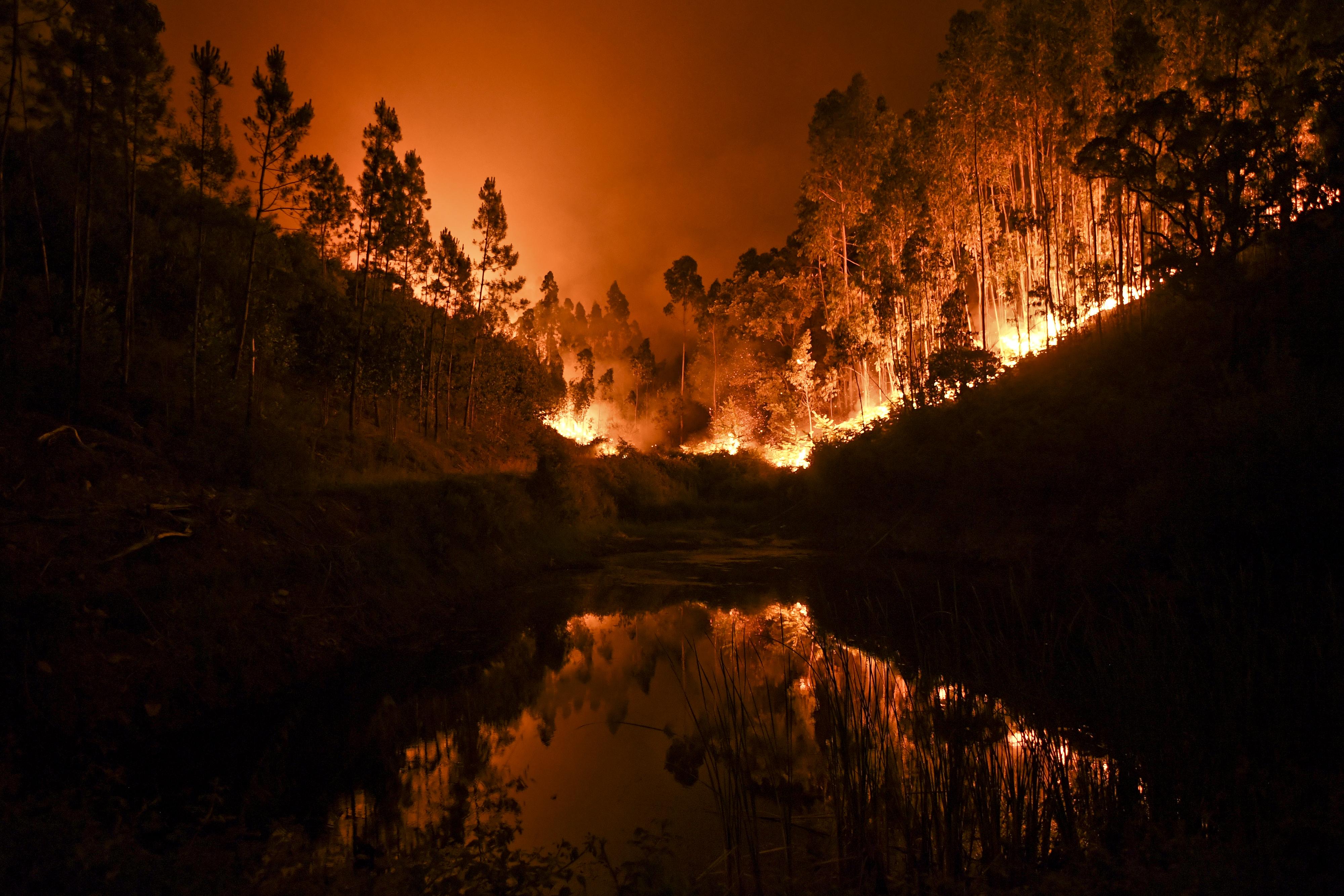 Relatório antecipa mais tempestades de fogo da tipologia registada em Pedrógão
