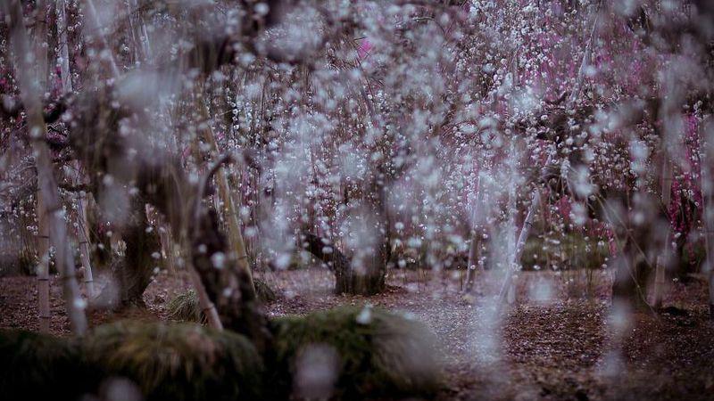 A magnífica Primavera japonesa