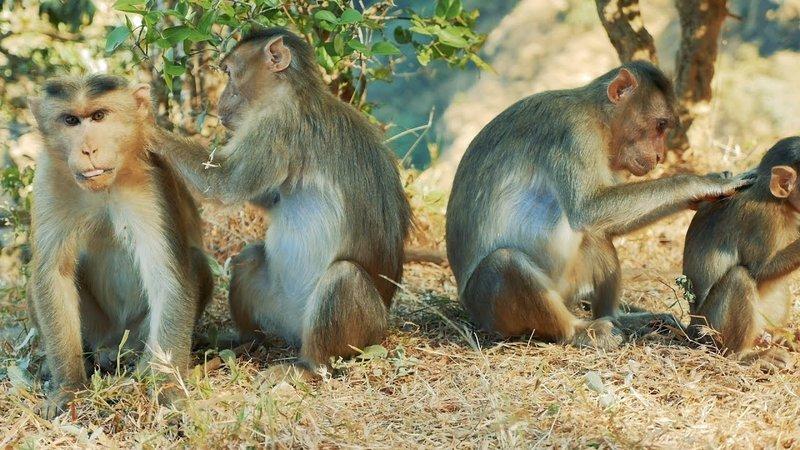 Os hábitos de higiene secretos dos animais