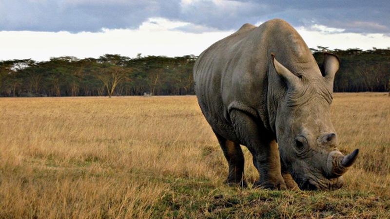 Safaris fotográficos colocam animais em perigo