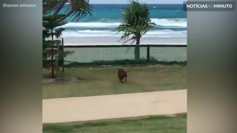 Cadela ficou demasiado entusiasmada com dia de praia