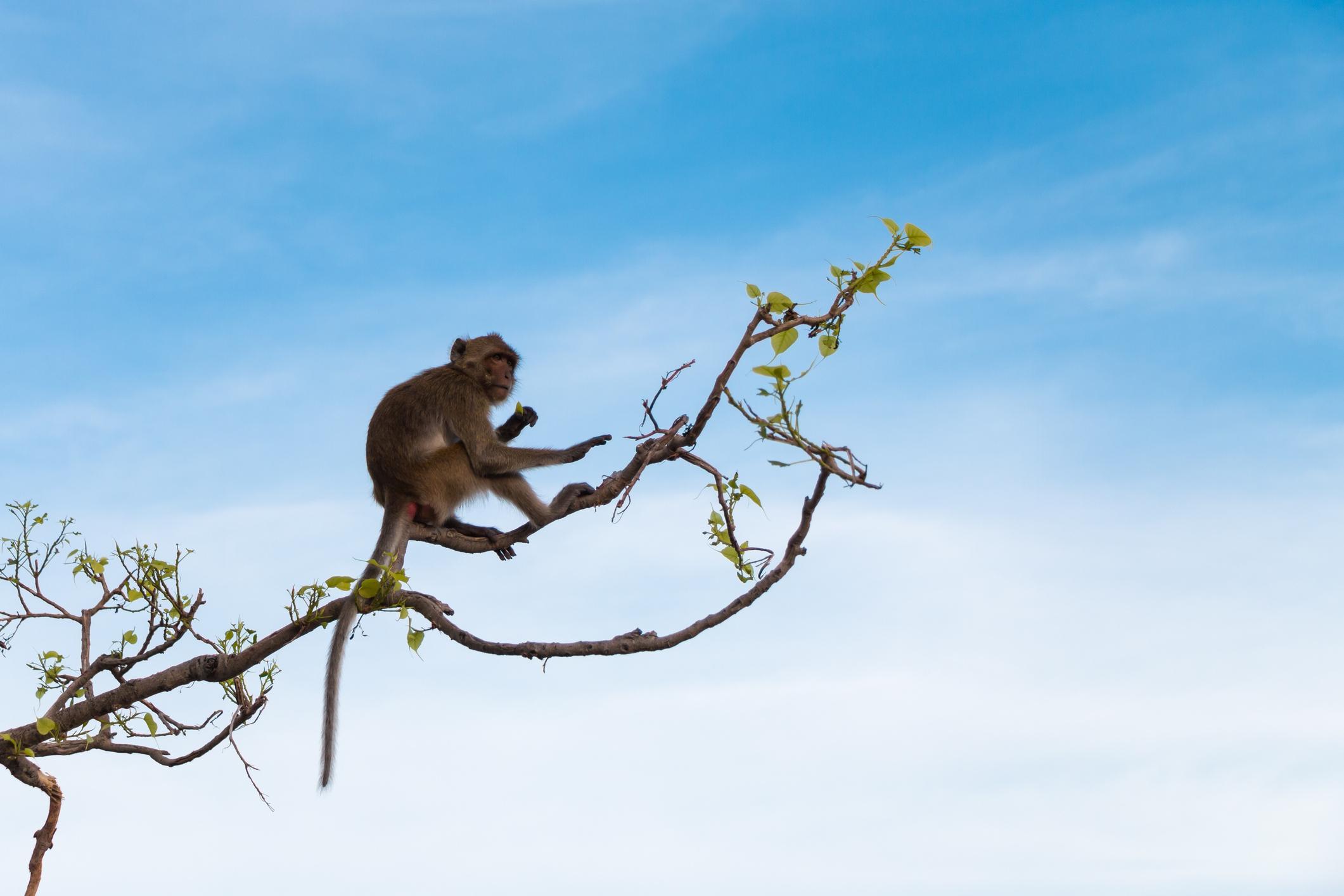 Os melhores sítios do mundo para ver macacos