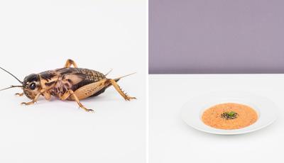 Seria capaz de comer este inseto? Duas fotógrafas italianas acreditam que sim