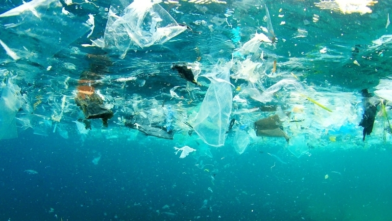 """""""Mais tarde ou mais cedo, o destino do plástico é o fundo do mar"""", alerta investigadora"""