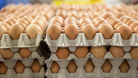 Será que devemos ingerir apenas dois ovos por semana?