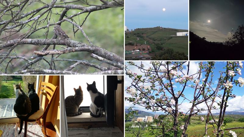 O que vejo da minha janela? Lua cheia, uma coruja e alguns gatos