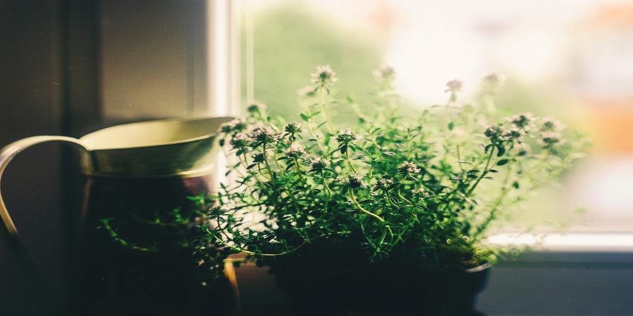 Nove plantas de interior que pode e deve comer