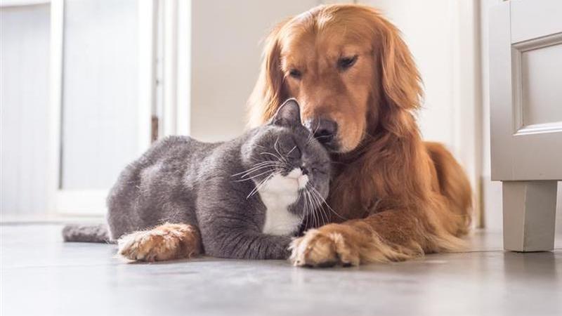 Já pode alimentar cães e gatos abandonados através do telemóvel