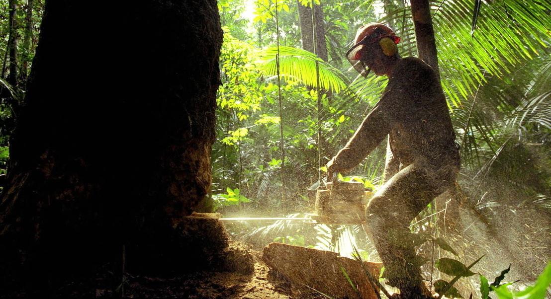#Hashtags não são suficientes. Como pode (realmente) ajudar a floresta da Amazónia