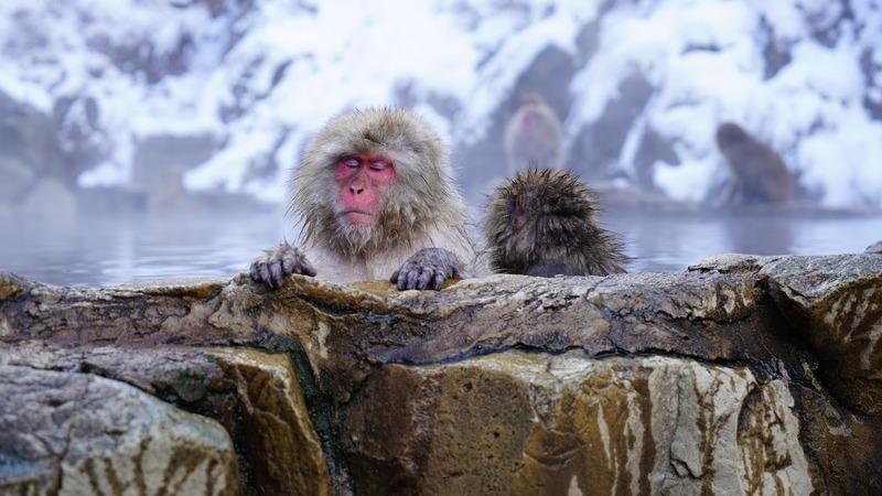 Férias para observar vida selvagem no inverno? É tão espetacular como no verão