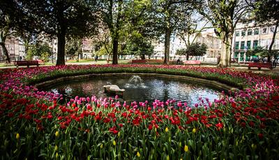 100 mil tulipas pintam a cidade do Porto de várias cores